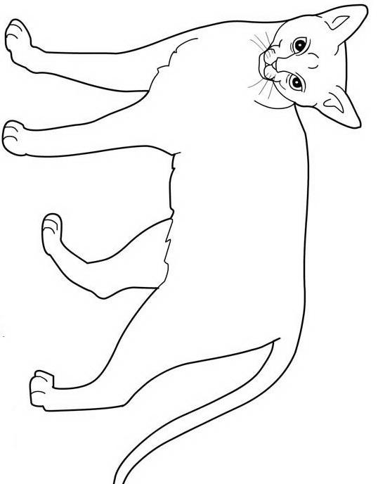 Gatto da colorare