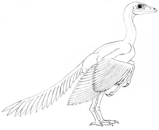Dinosauro da colorare 14