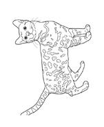 Gatti da colorare 3