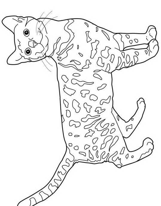 Gatto da colorare 2