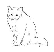 Gatti da colorare 4