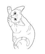 Gatti da colorare 16