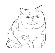 Gatti da colorare 19