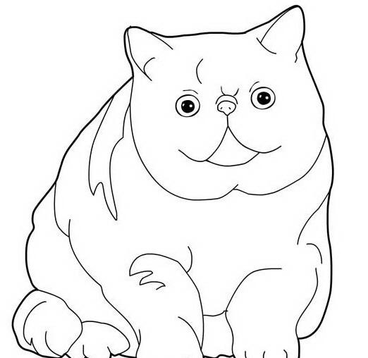 Gatto da colorare 18