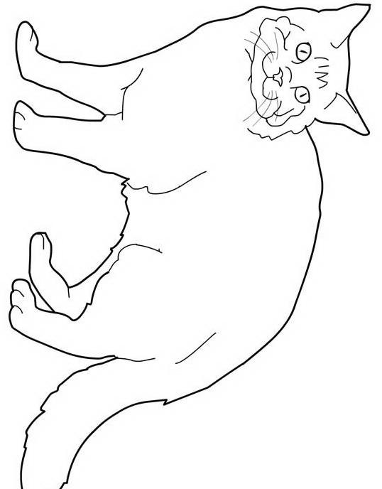 Gatto da colorare 153