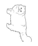 Gatti da colorare 157