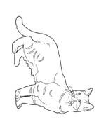 Gatti da colorare 158