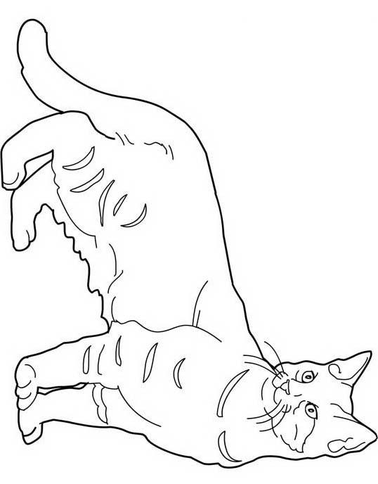 Gatto da colorare 157