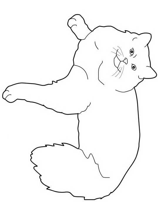 Gatto da colorare 158