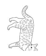 Gatti da colorare 161