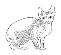 Gatti da colorare 162