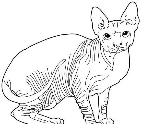 Gatto da colorare 161