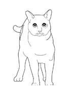 Gatti da colorare 163