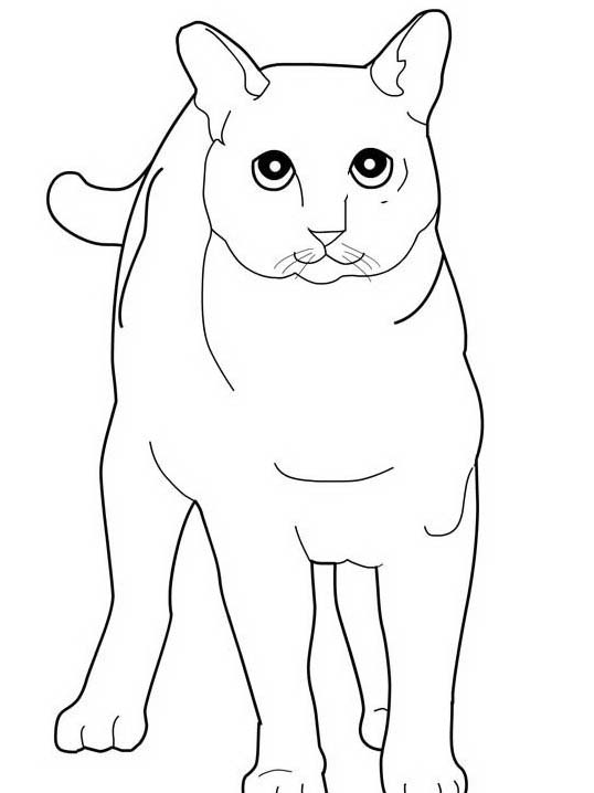 Gatto da colorare 162