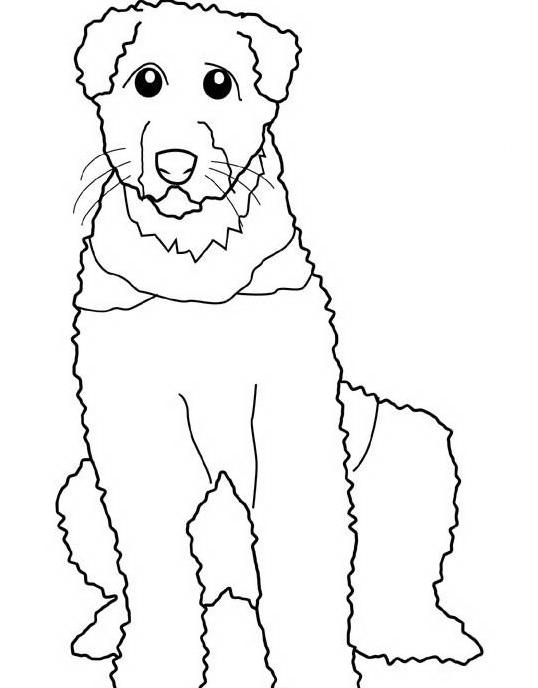 Cane da colorare 2