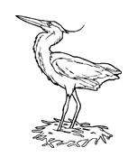 Uccello da colorare