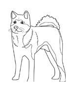 Cane da colorare 3