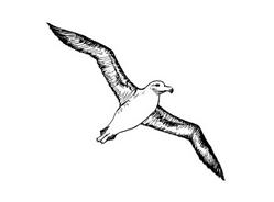 Uccello da colorare 4