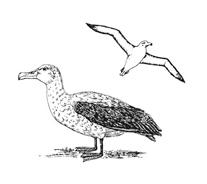 Uccello da colorare 5