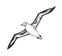 Uccello da colorare 6