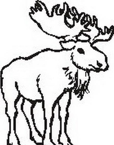 Alce e cervo da colorare