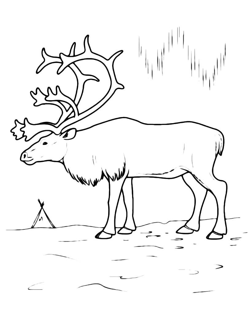 Alce e cervo da colorare 4