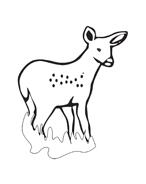 Alce e cervo da colorare 13