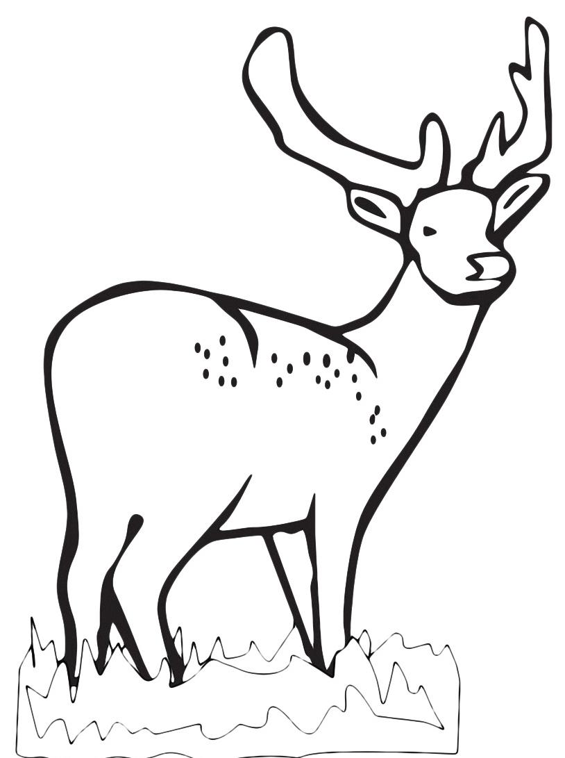 Alce e cervo da colorare 15