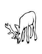 Alce e cervo da colorare 18