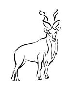 Alce e cervo da colorare 24
