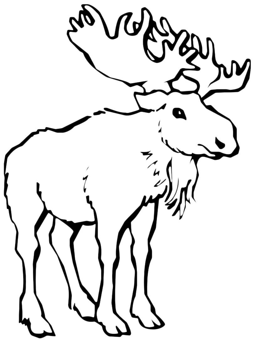 Alce e cervo da colorare 27