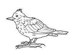 Uccello da colorare 7
