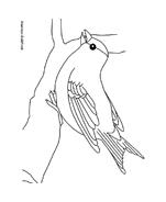 Uccello da colorare 8