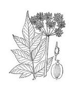 Arbusto da colorare 4