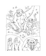 Scimmia da colorare