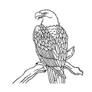 Aquila da colorare