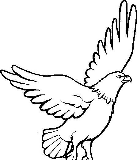 Aquila da colorare 3
