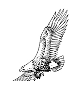 Aquila da colorare 6