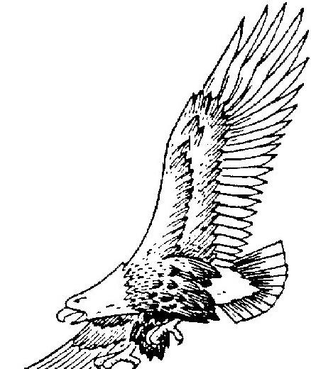 Aquila da colorare 6