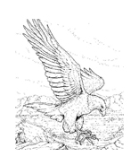 Aquila da colorare 8