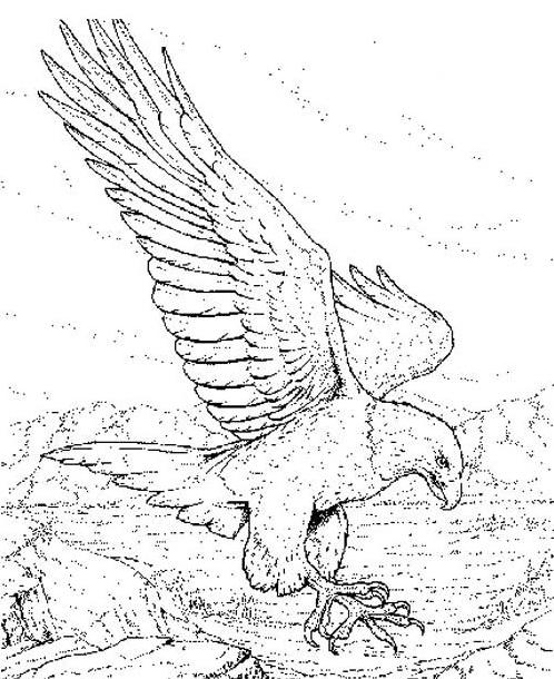 Aquila da colorare 8