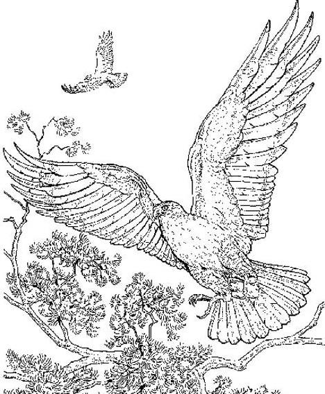 Aquila da colorare 9