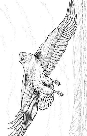 Aquila da colorare 10