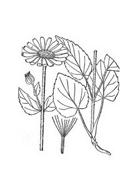 Arbusto da colorare 5