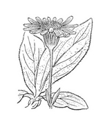 Arbusto da colorare 6