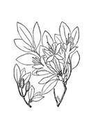 Fiore da colorare 2
