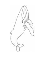 Balena da colorare 2