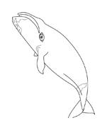 Balena da colorare 4