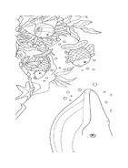 Balena da colorare 6