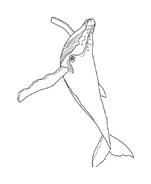 Balena da colorare 7